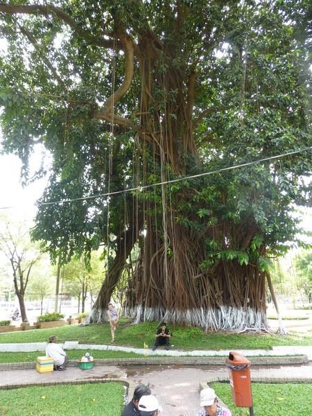 arbre-avec-plein-de-racines